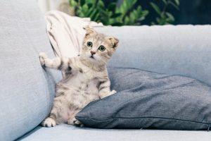 חול לחתולים